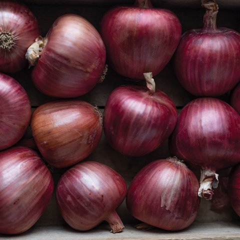 Cebolla morada por kilo