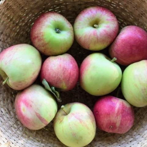 Manzana orgánica